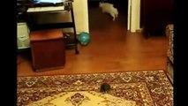 Funny Animals Cat Dog and others - Video divertente di Animali, cani gatti e altri...
