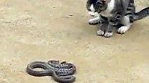 Mačor protiv poskoka