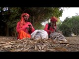 Snake charmers hypnotize snakes by playing the 'been'