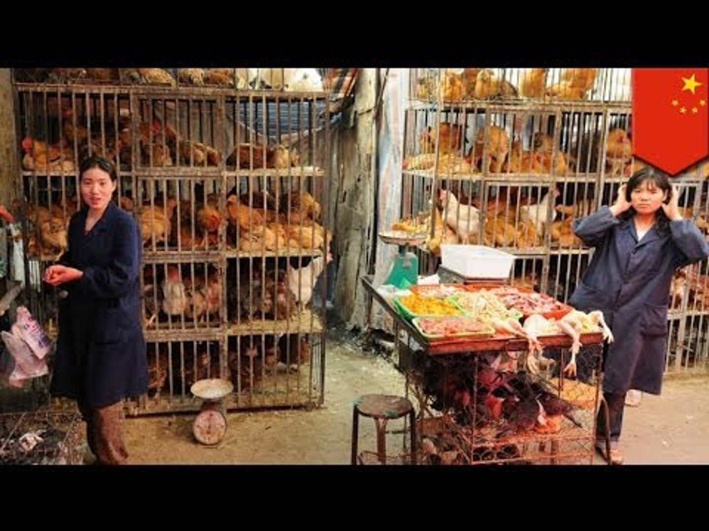 H10N8 bird flu virus: Chinese scientists decipher genetic composition of new strain