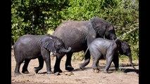 Photo Safari Big Five Slide Show - Photos of Africa