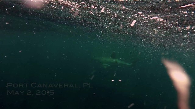 Terrifying Close Encounter with GREAT WHITE shark