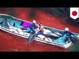 Dolphin slaughter in Japan: hundreds of dolphins killed in Taiji's annual hunt