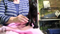 Paralyzed Kitten Given Second Chance With Wheelchair