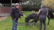 Die Gerte in der Pferdedressur - Pferdetrainer Mario Lurashis erzählt von seiner Arbeit