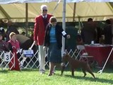 The 2008 Irish Terrier Club of America National Specialty