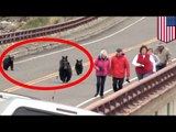 Bear encounter: Tourists flee black bears in Yellowstone National Park - TomoNews