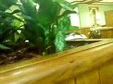 blattes chez mcdo