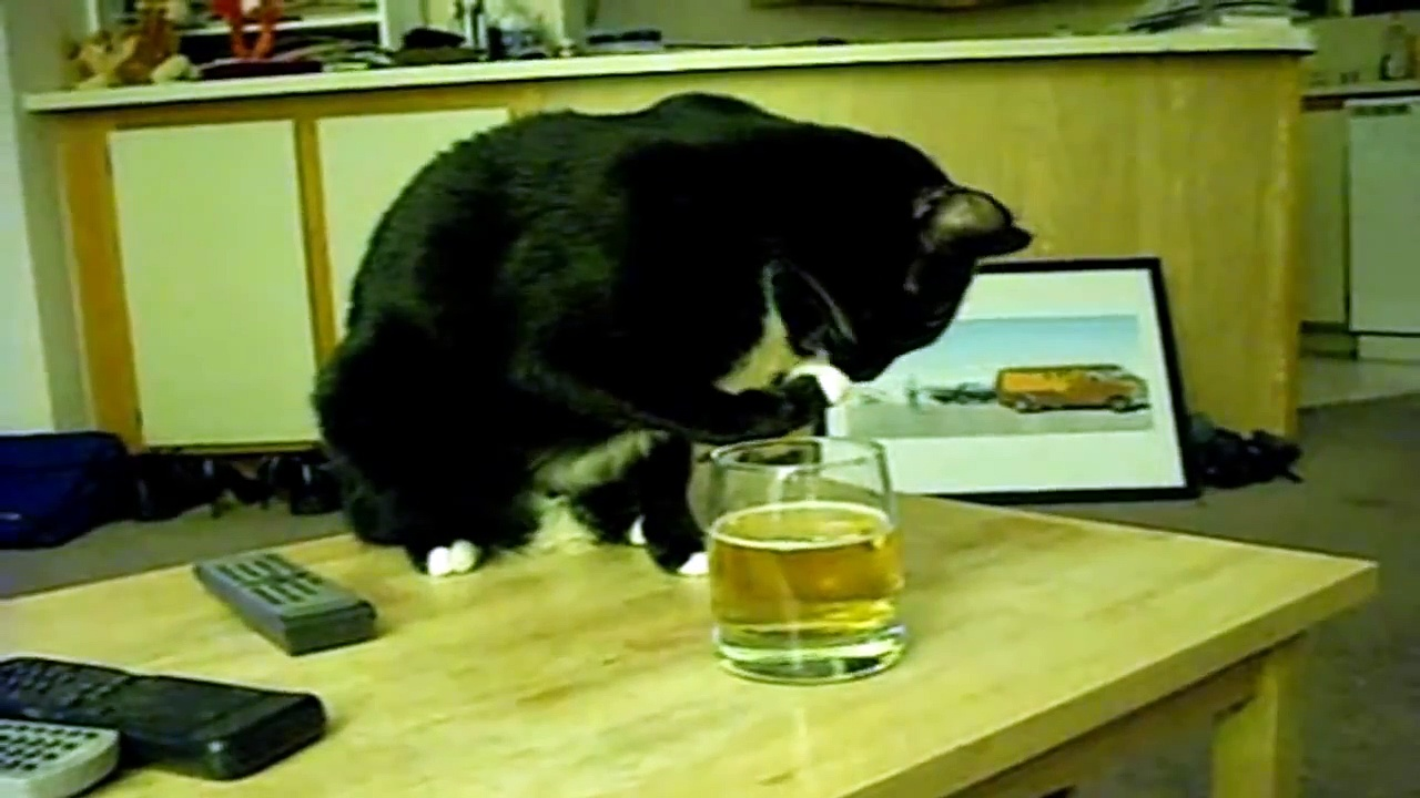 BEER DRINKING CATS