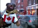 Triumph insult comic dog