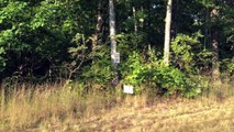 Tennessee Mountain Private Community Lots For Sale, 3 Lakes, Bears, Mtn Lions