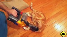 FUNNY VIDEOS_ Funny Cats - Funny Cat Videos - Funny Animals - Fail Compilation - Cats Love Vacuums
