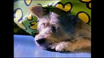 15 FUNNY DOG ADS!! MUST SEE DOG COMMERCIALS!! Long Version