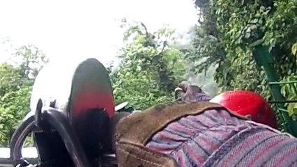 Tyrolienne dans la forêt tropicale au Costa Rica : ne cliquez pas si vous avez le vertige... !