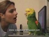 Dieser Papagei kann singen und tanzen SAUGEIL