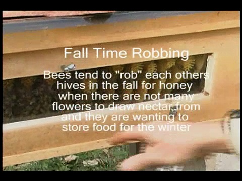 Bees Robbing Honey