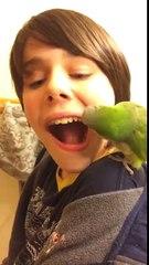 Kuşa diş çektirmek