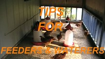Simple tips for chicken feeders and waterers