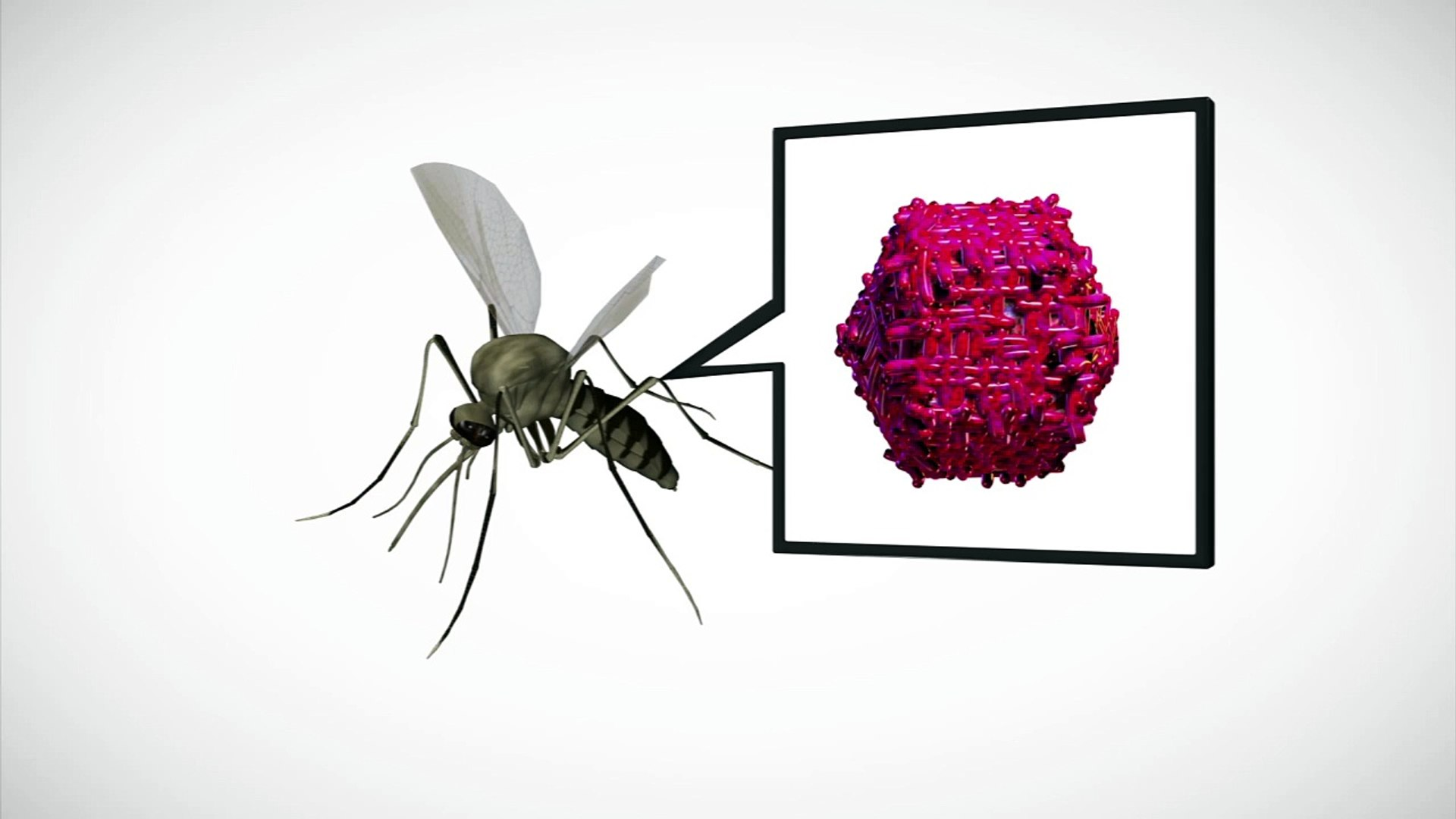 West Nile virus: How the virus spreads