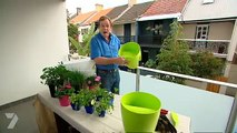 Better Homes and Gardens - Gardening: small space veggie garden