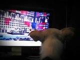 Perrro aullando,fan de Metalllica(Torin).Nothing Else Matters.Dog & Nothing Else,Matters Metallica.
