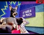 "Animais Abandonados ""Domingo Espetacular"" 21/07/13 (HD)"
