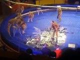 Lion Attack Original VIDEO of Lion Attack at L'viv Circus Ukraine