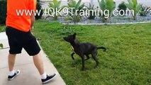 IQ K9 TRAINING | Del Mar Dogs Training Fun!