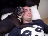 My Boston Terrier Joy is a Crazy Person!