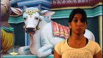Sanatan Dharm net Darshan_Cows in India