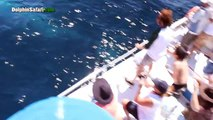 Dana Point Whale Watching Passengers Up Close With Giant Blue Whale