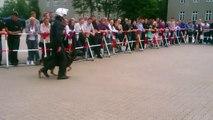 Polizei Hundestaffel Schutzhund Demonstration- police dog unit guard demonstration