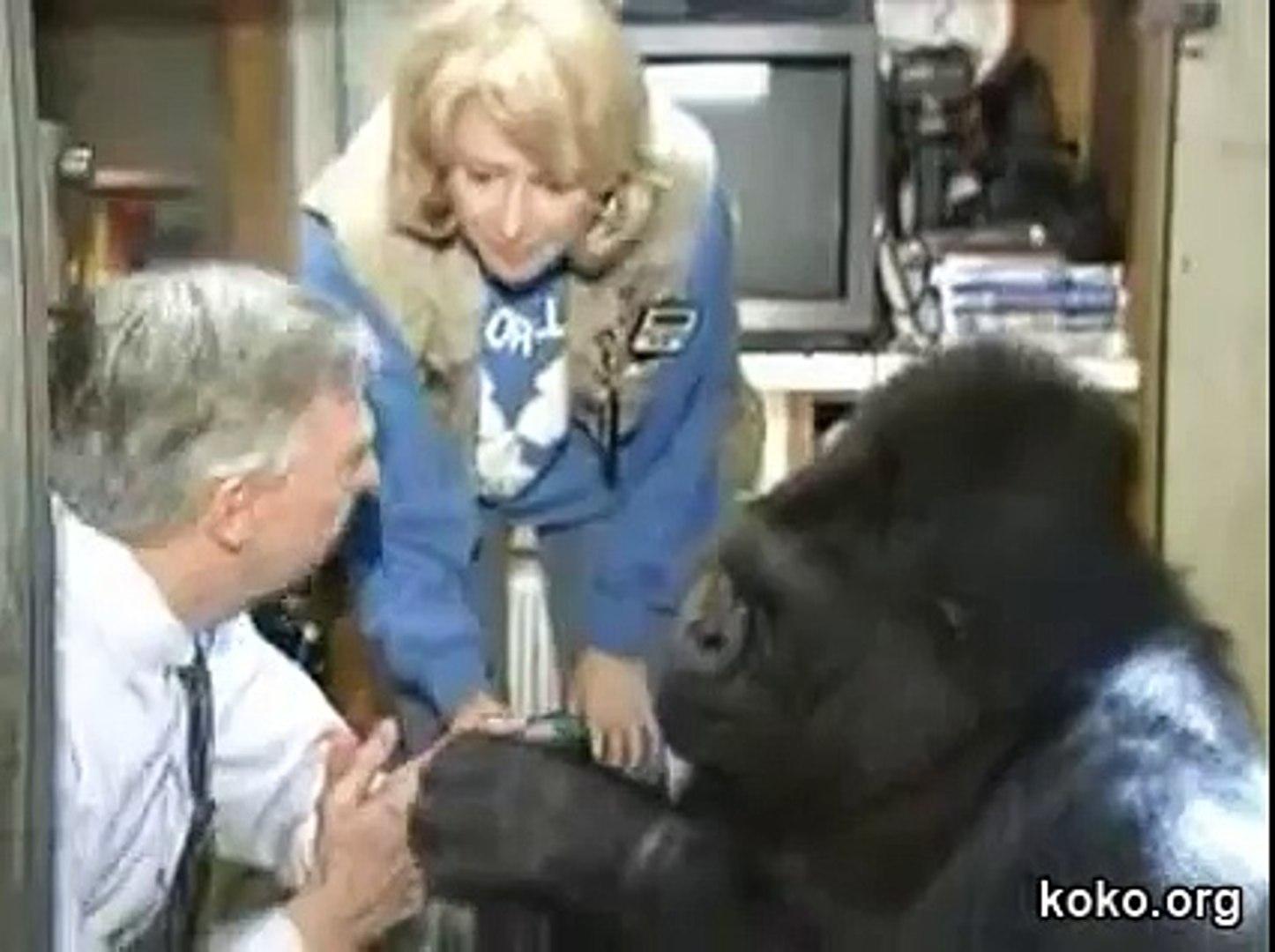 Koko Meets Mr Rogers Her Favorite Celebrity Video Dailymotion