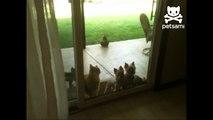 кошка-открывашка
