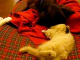 cane e gatti amici. divertente! giocano insieme. dolci