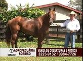 AGROPECUARIA SORRISO - VENDA DE TOUROS, CAVALOS E JUMENTOS PÊGA.f4v