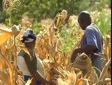 La météo sur les téléphones portables au secours des agriculteurs au Kenya