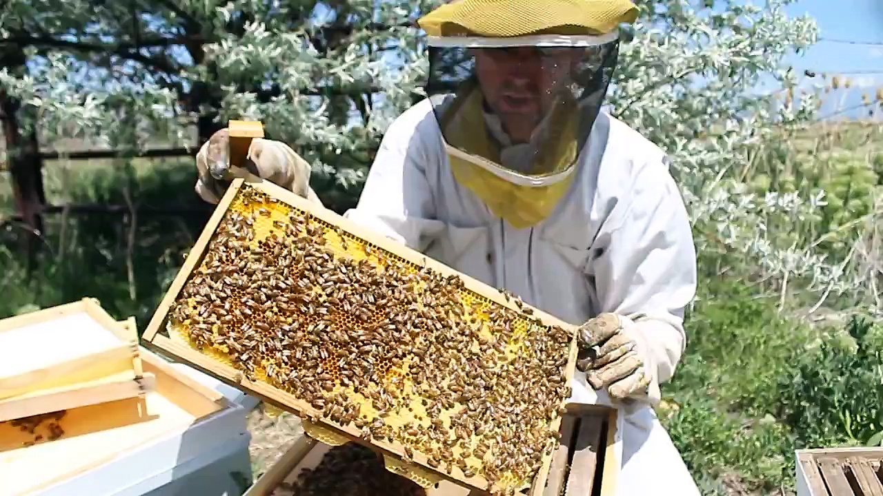Life Cycle of a Worker Honey Bee