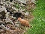 Kittens aan het spelen 08-07-2006