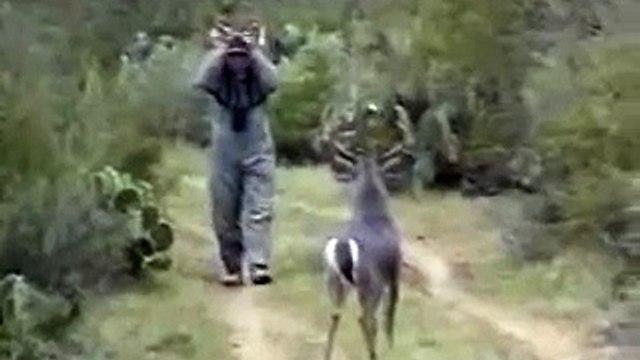 confused deer