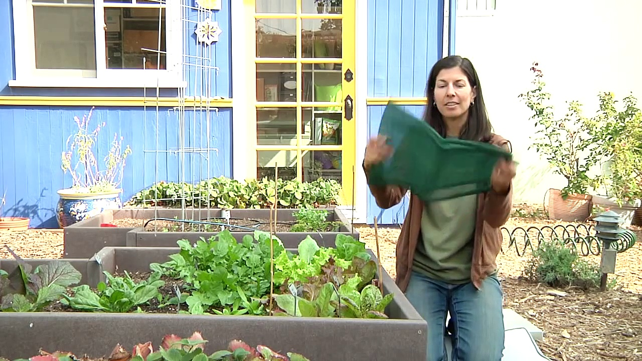 Growing Greens : How to Raise Lettuce in Summer