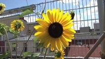 1 jour 1 action : nature en ville et jardin d'insertion à Paris