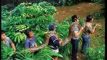 Las Serpientes Más Grandes del Mundo - Serpientes Gigantes
