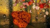 Музыка дождя Танец страсти, дождь и красивая музыка!