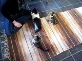 Busiga kattungar! (Playfull kittens!)