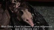 Effrayée par un opossum, elle fond quand elle réalise qu'il s'agit d'une mère et ses bébés