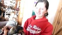 Ils placent un chiot dans une portée de chatons, la réaction de la maman est magnifique