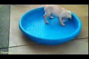 funny animals - funny videos: funny cats - funny fails - funny animals - cat funny videos 16