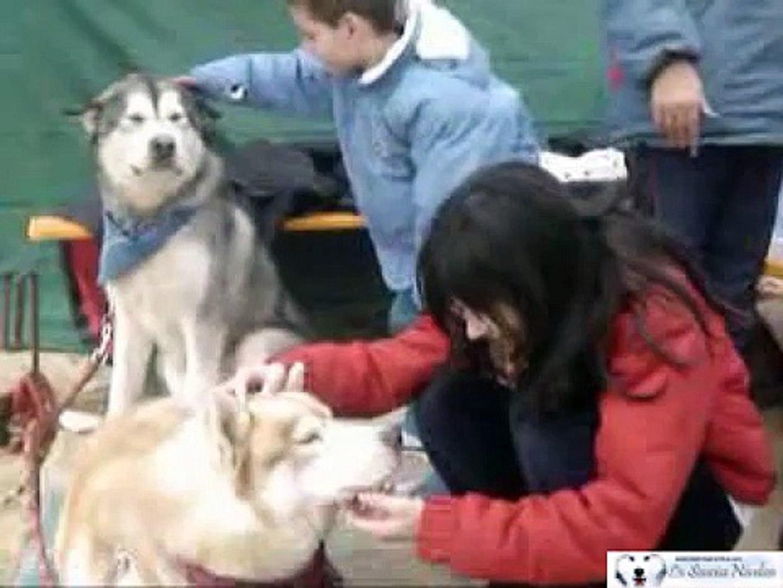 Vídeo Homenaje a Spiro, Un husky muy especial. // A Tribute to Spiro, A very Special Husky