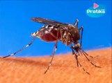 Voici comment fabriquer un piège à moustiques efficace